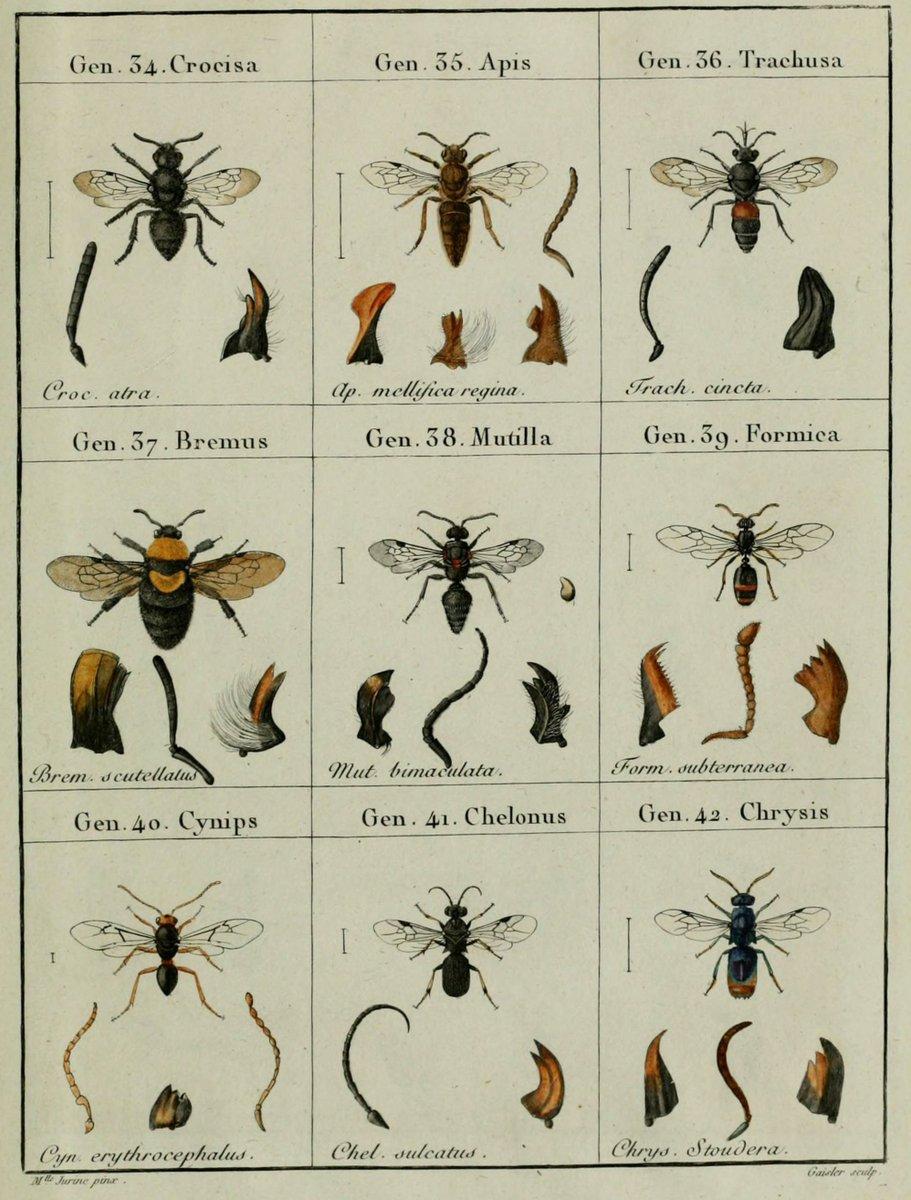 Jurassikus rovarok tévesen azzal vádolva, hogy kártevők - Bolygó -
