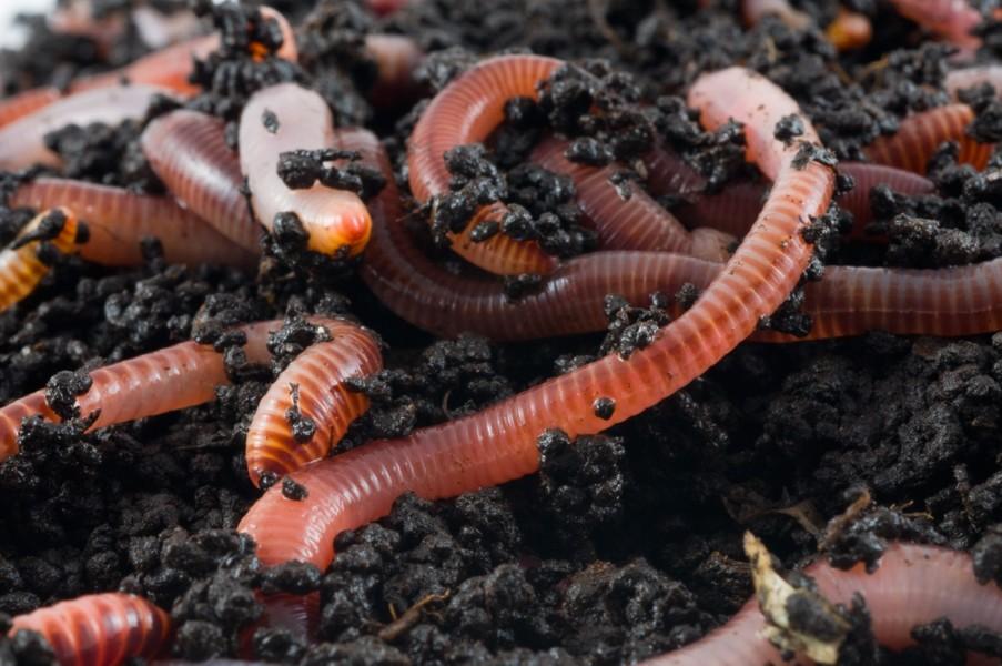 nyers élelmezők tisztítják a parazitákat
