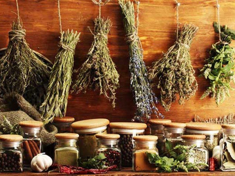 choleretic gyógynövények giardiasishoz