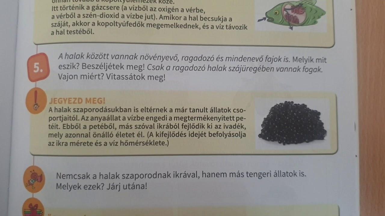 mit eszik a szarvasmarhafenyő