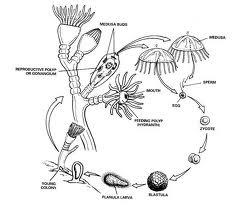 Enterobiosis és megelőző intézkedések