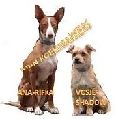 giardia hond forum