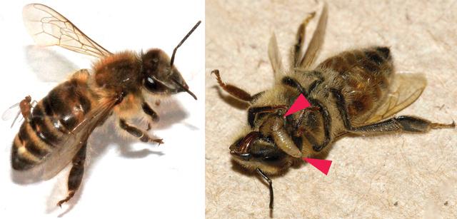 Elkezdődött a kullancsszezon – így védekezhet a parazita ellen - Sopron Médiaportál