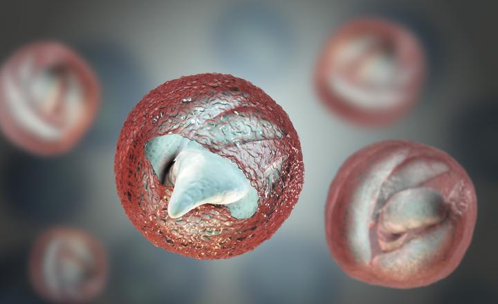 pinworm sanoxal