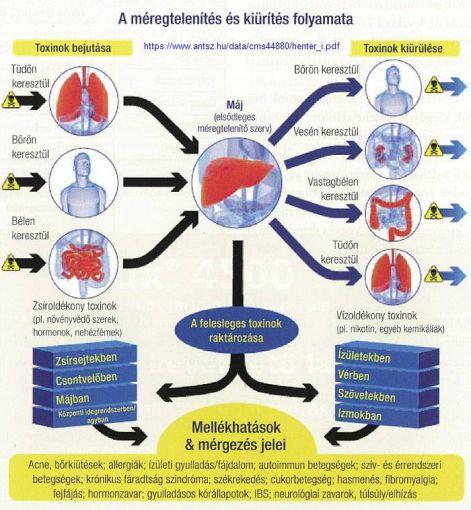 az aszcariasis bél stádiuma a legújabb generáció széles spektrumú antihelmintikus gyógyszerei