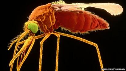 Malária - Mi az és hol kell tőle tartani? | BENU Gyógyszertárak