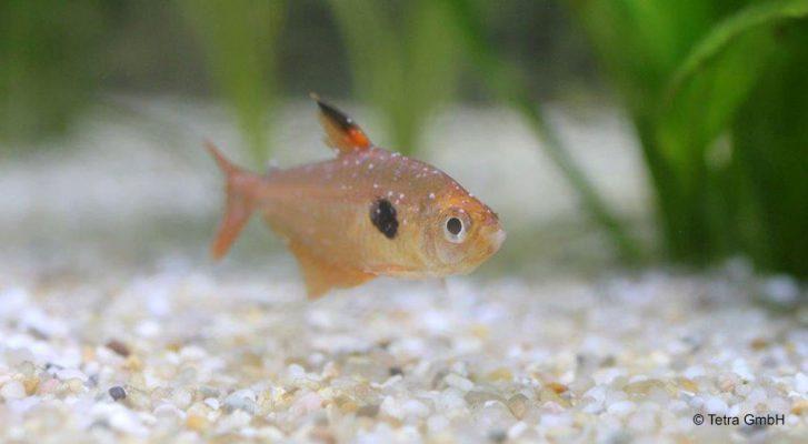 a halak paraziták szolva az emberek parazitairol