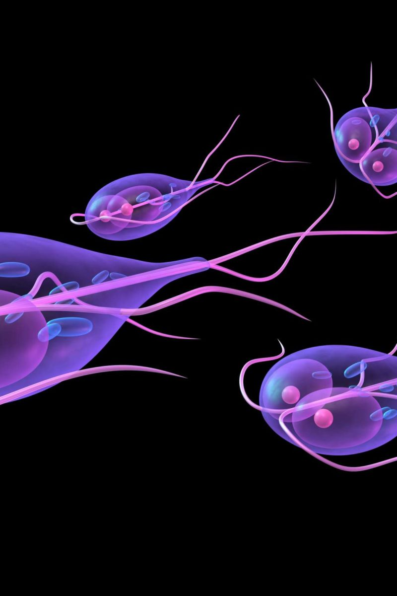 Giardia recurrence symptoms