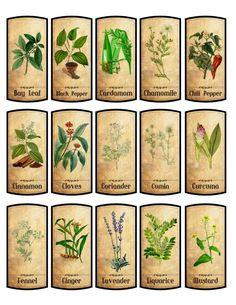 Gyűjtse 70 gyógynövények prosztatagyulladás