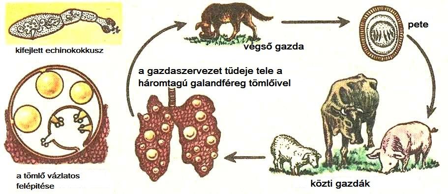 laposférgek paraziták
