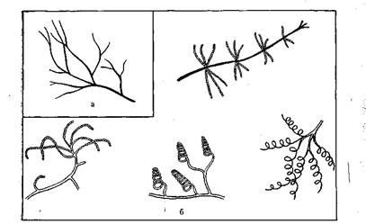 hymenolepidosis közbenső gazdaszervezet intoxikált orenburg áron