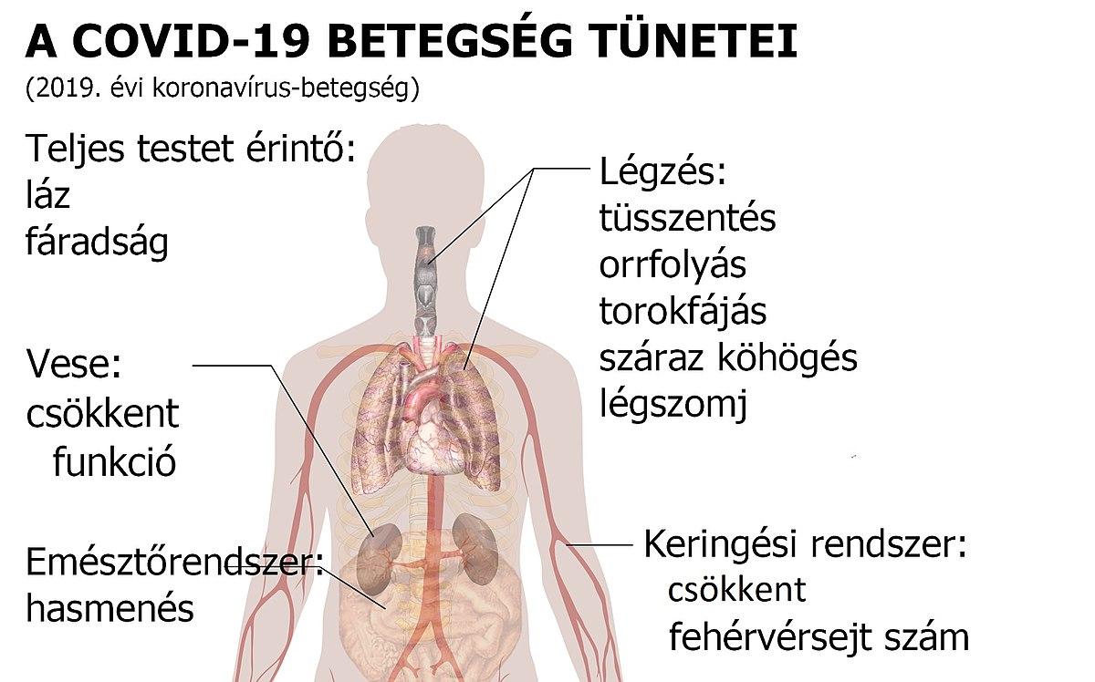 horgosférgek a fő klinikai tünetek