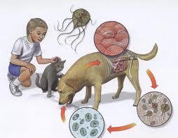 infectie giardia simptome parazitaflukes készítmények
