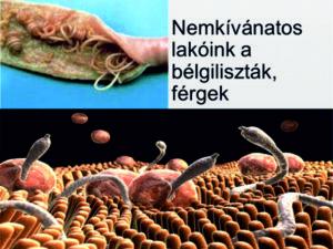 féreg paraziták