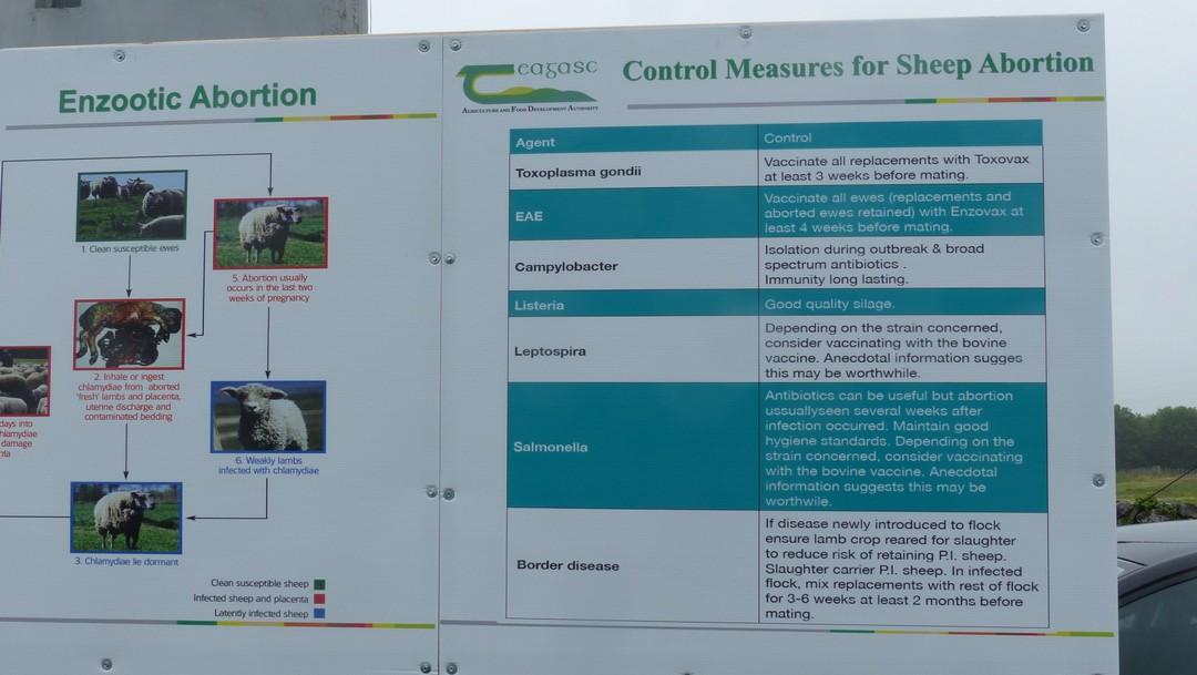 standard eljárás Zymex 2 paraziták hogyan terjednek a helmint betegségek az emberekre