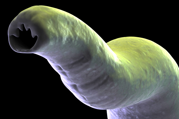 üröm tisztítja a paraziták testét