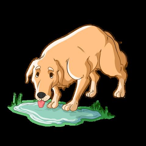 giardia in puppies a giardiasis életciklusa