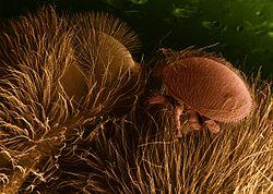 ázsiai paraziták