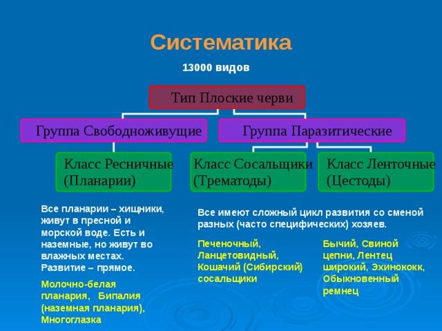 a tenyészbika szalagféreg jellemzői