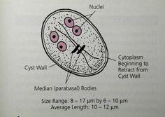 tisztító könyv a parazitáktól pinworms a földben