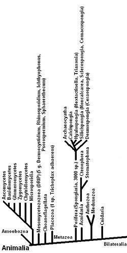 Annelida Bevezetés - gyűrűsférgek. Bevezetés az állattanba