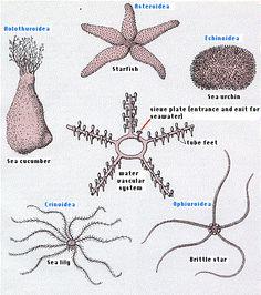 annelids paraziták