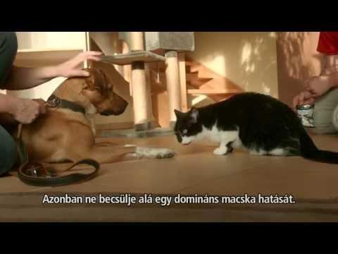 hogyan lehet eltávolítani férgeket a macska