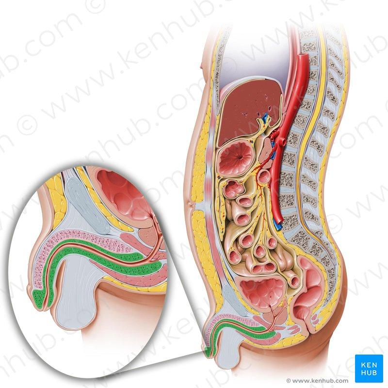 Plica duodenalis Diagnosi giardia bambini