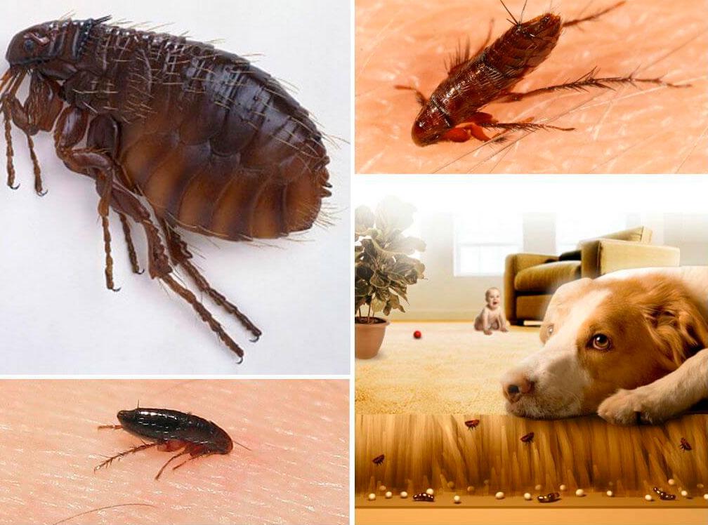 milyen tablettákat lehet megszabadulni a parazitáktól