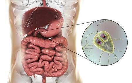 giardia liver disease cink kenőcs gyermekek pinworms számára