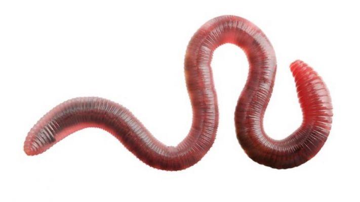 paraziták a bélben tünetek kezelési áttekintése parazita dátum