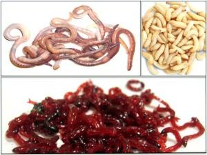 férgek kerekféreg pinworms kezelése