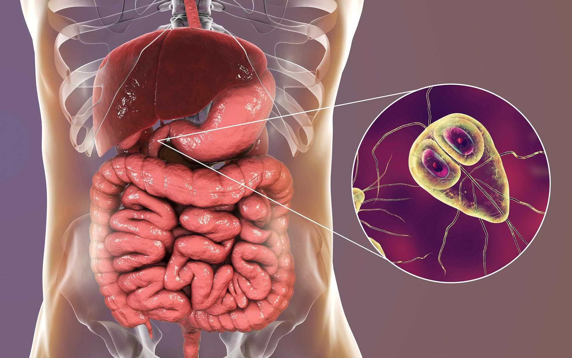 Giardia infektion therapie.