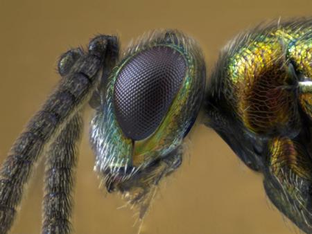 új parazitapusztítók