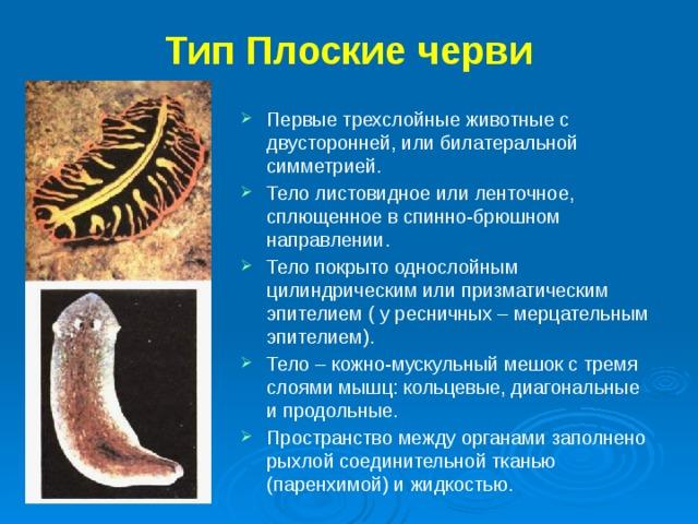Típusú helminták az emberekben, Képek a parazitákról, helmintákról, A szemgolyóban élő helminták