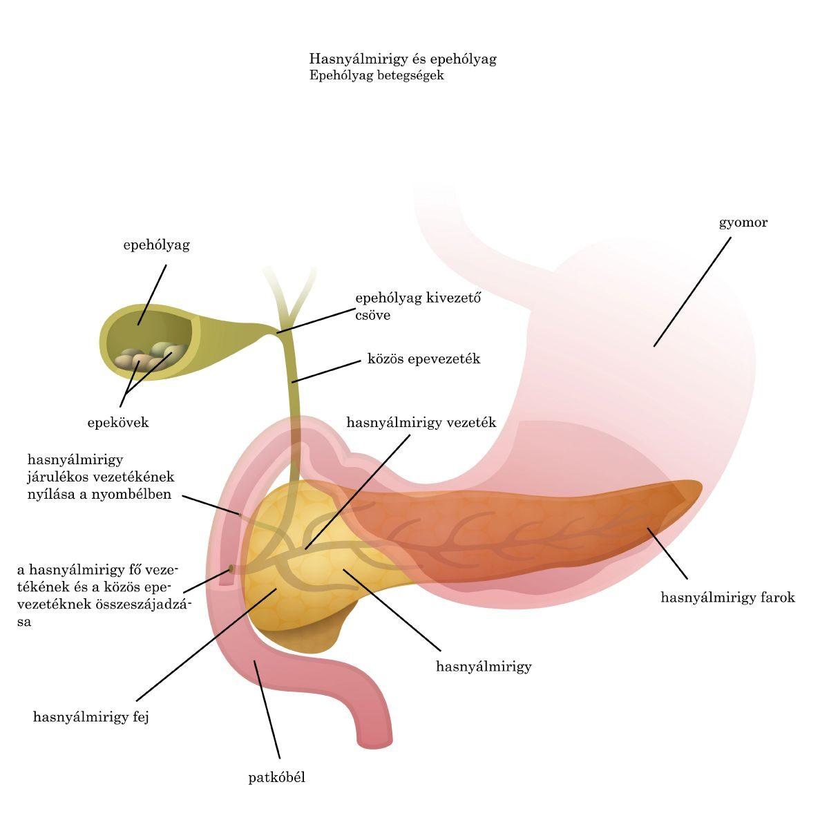 paraziták a májban és az epehólyag tünetei