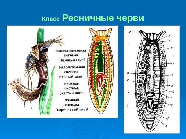 A parazitákról :: Egészség Stúdió - Természetes módszerek, alternatív technikák a jól-létért