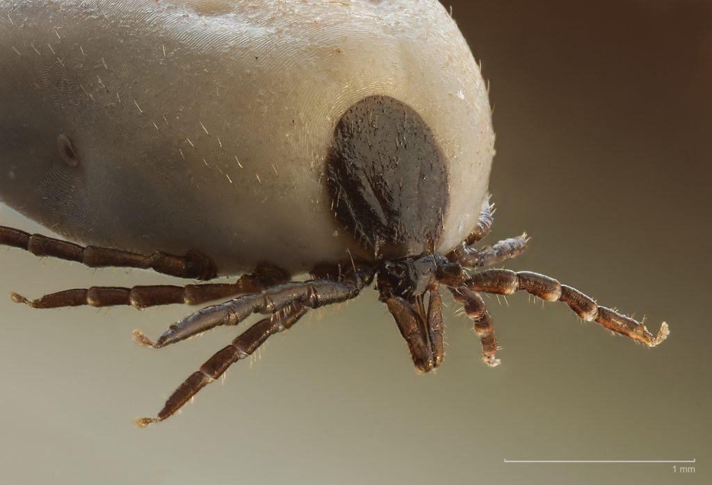 férgek bőr parazitái féreg gyógyszer terhes szukák számára