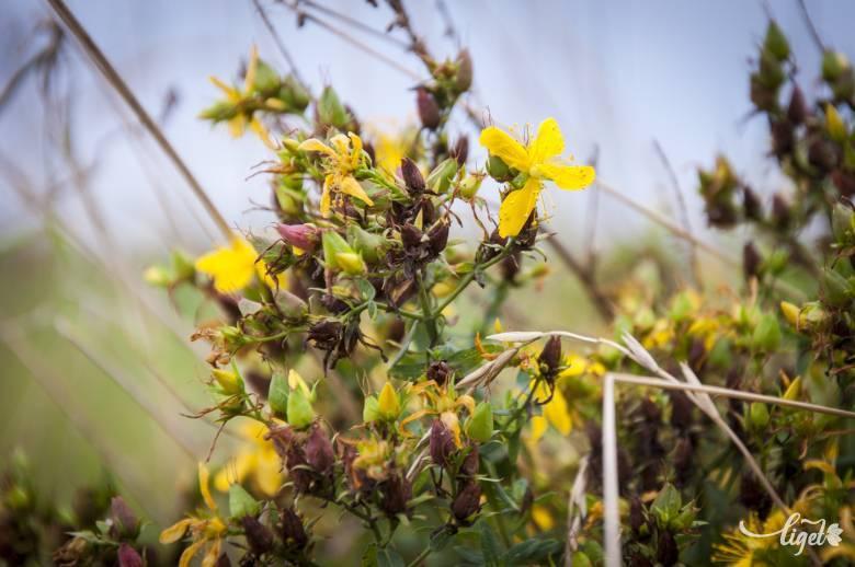 Méregtelenítő gyógynövények: hogyan méregtelenítsünk természetesen?