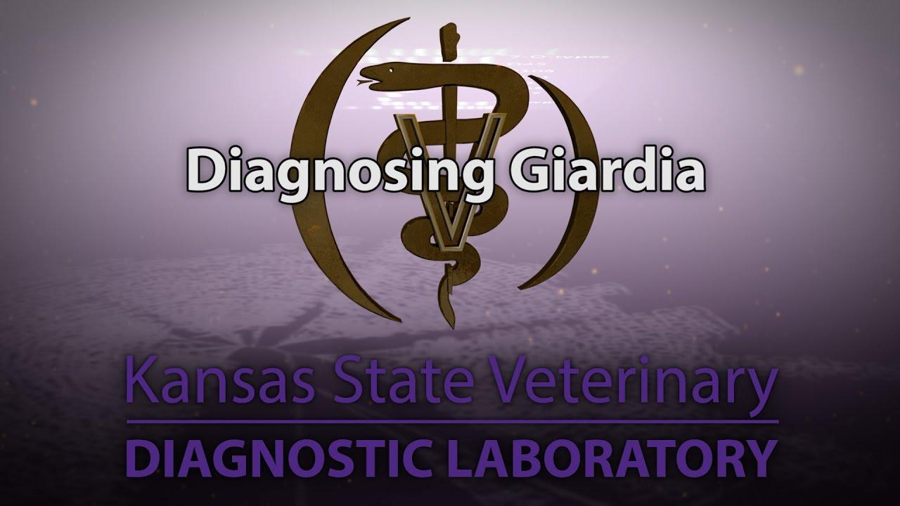 Giardia felnőtteknél - tünetek, diagnózis és kezelés - Cirrózis -