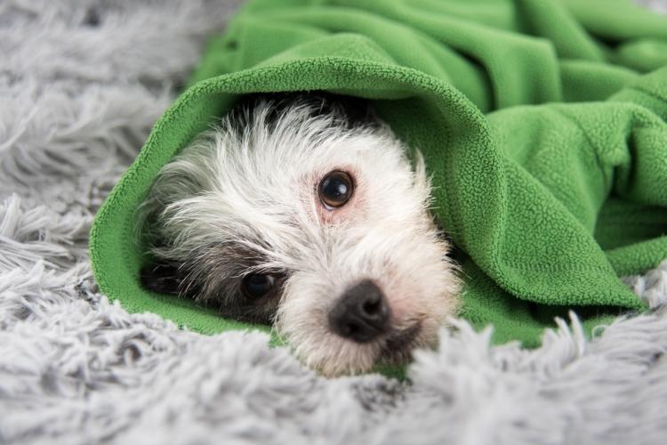 szívférgesség jelei kutyáknál belfereg fertotlenites