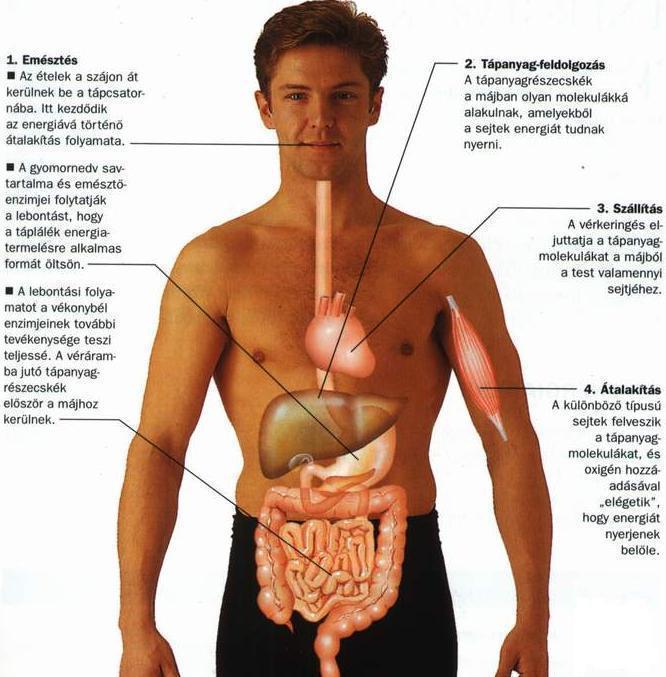test szervezet