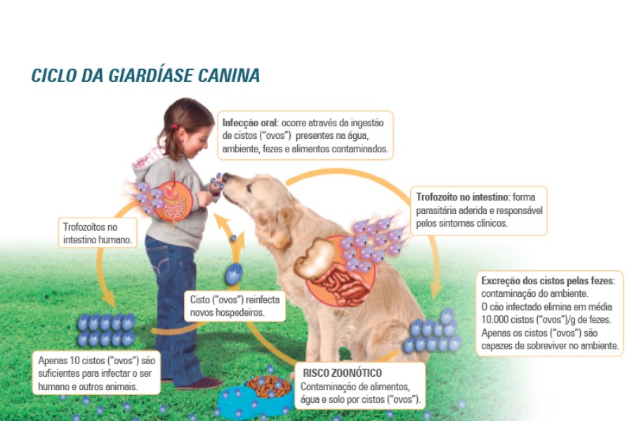Mi a veszélyes giardiasis?