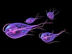 bacteria giardia en humanos