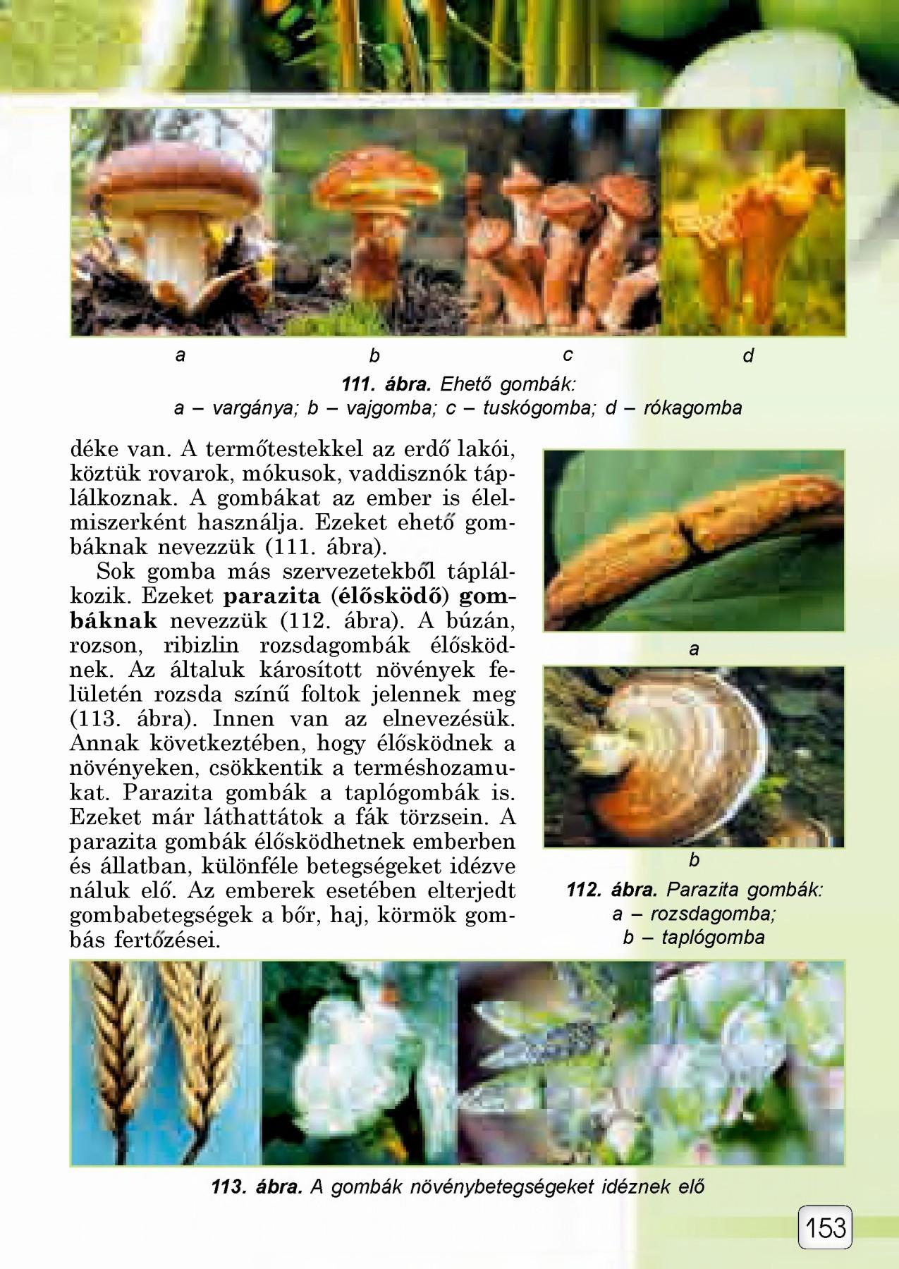 a gombák paraziták méz tisztítása a parazitáktól