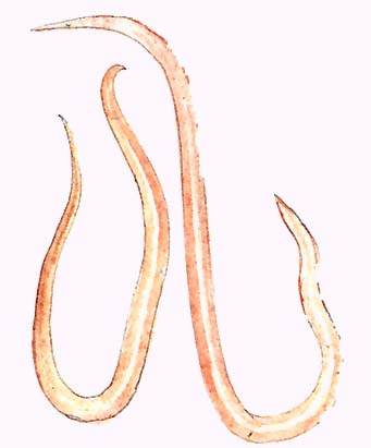 Agymosott szöcskék halálugrása   National Geographic