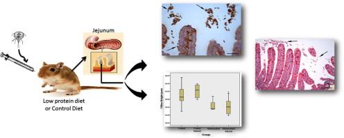 giardia diet paraziták gyógyítása literben