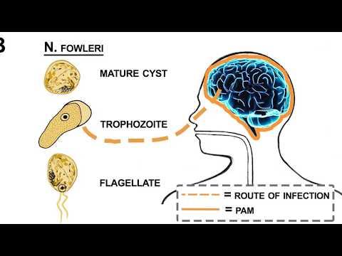 a paraziták gyógyszereinek összehasonlítása