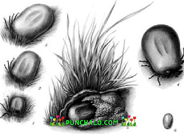 bél paraziták inkubációs periódusa a rossz lehelet hasnyálmirigy