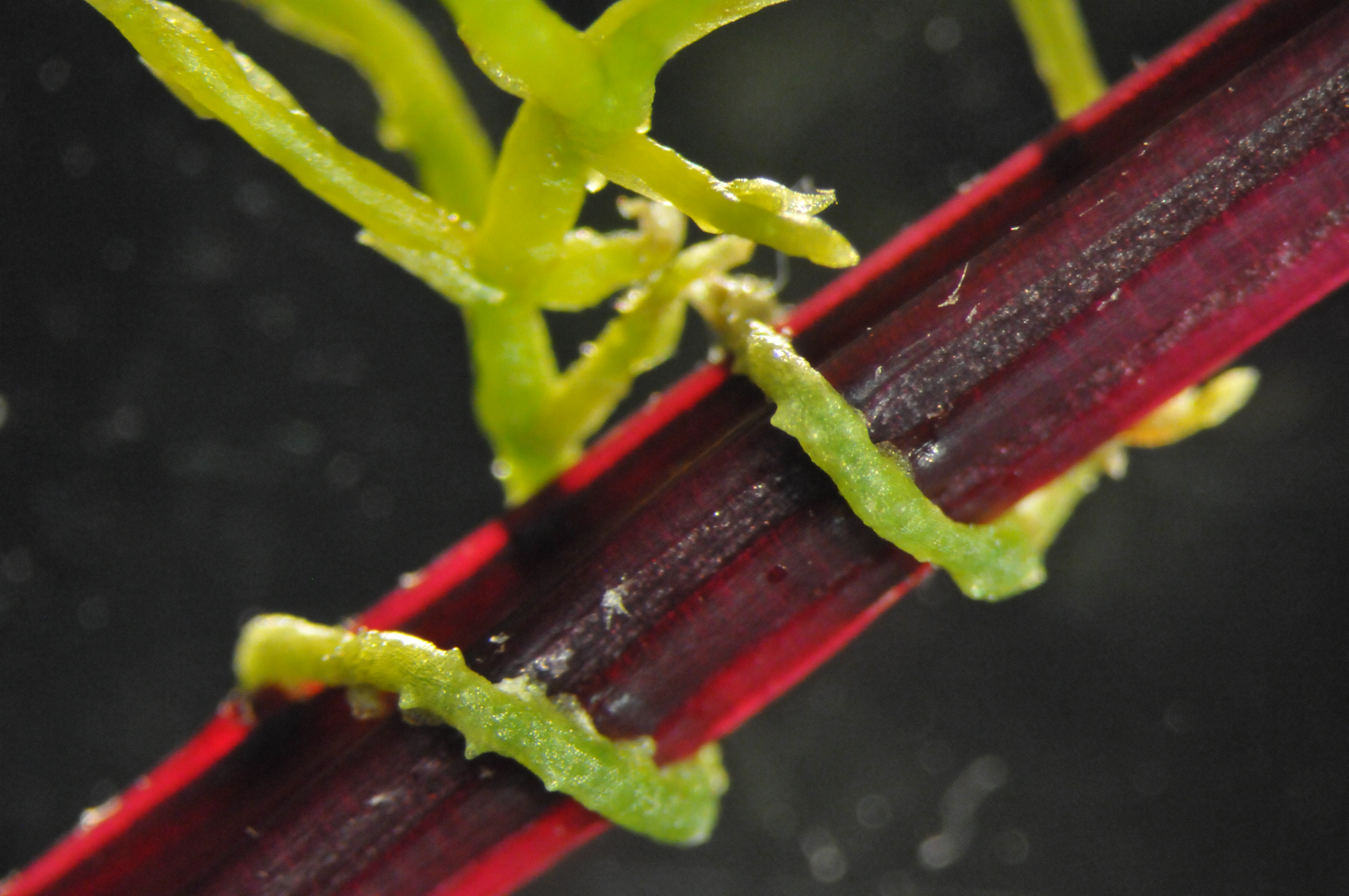 Irányítják gazdáikat a paraziták | National Geographic